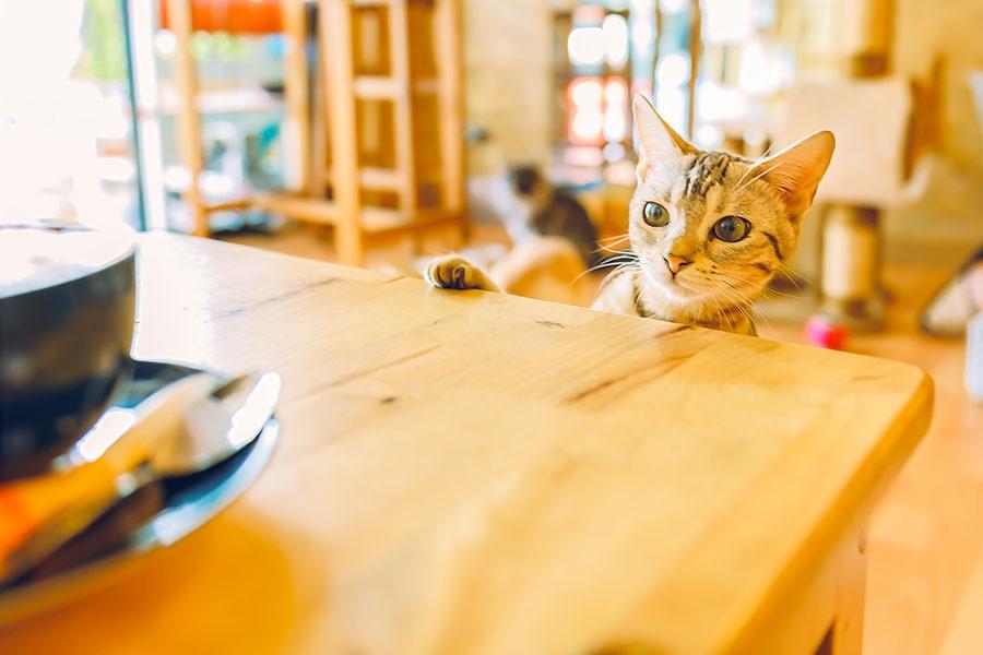 猫カフェ風我が家